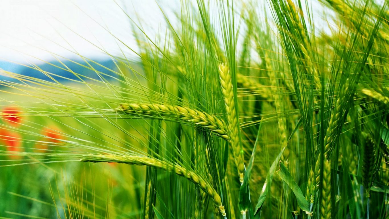 Diploma in Crop Production