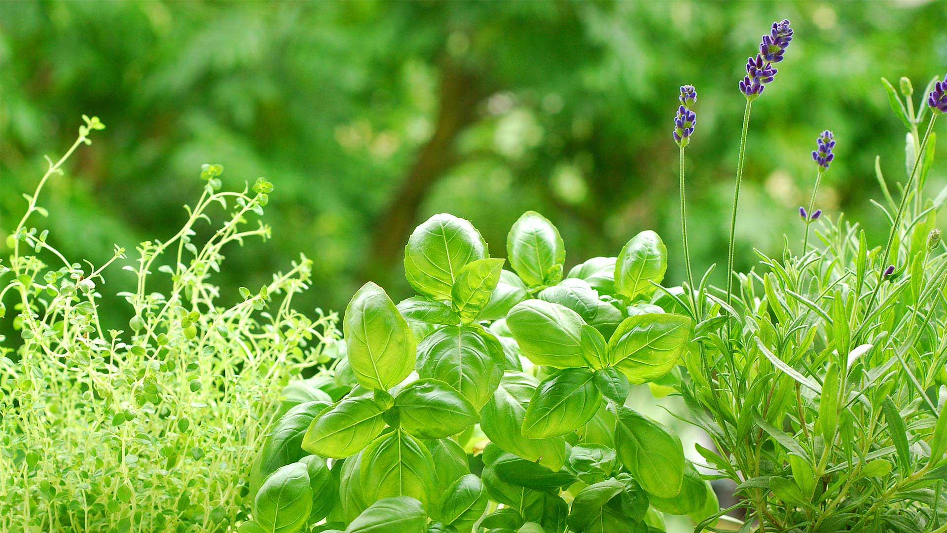 DIPLOMA IN MEDICINAL PLANT C.T